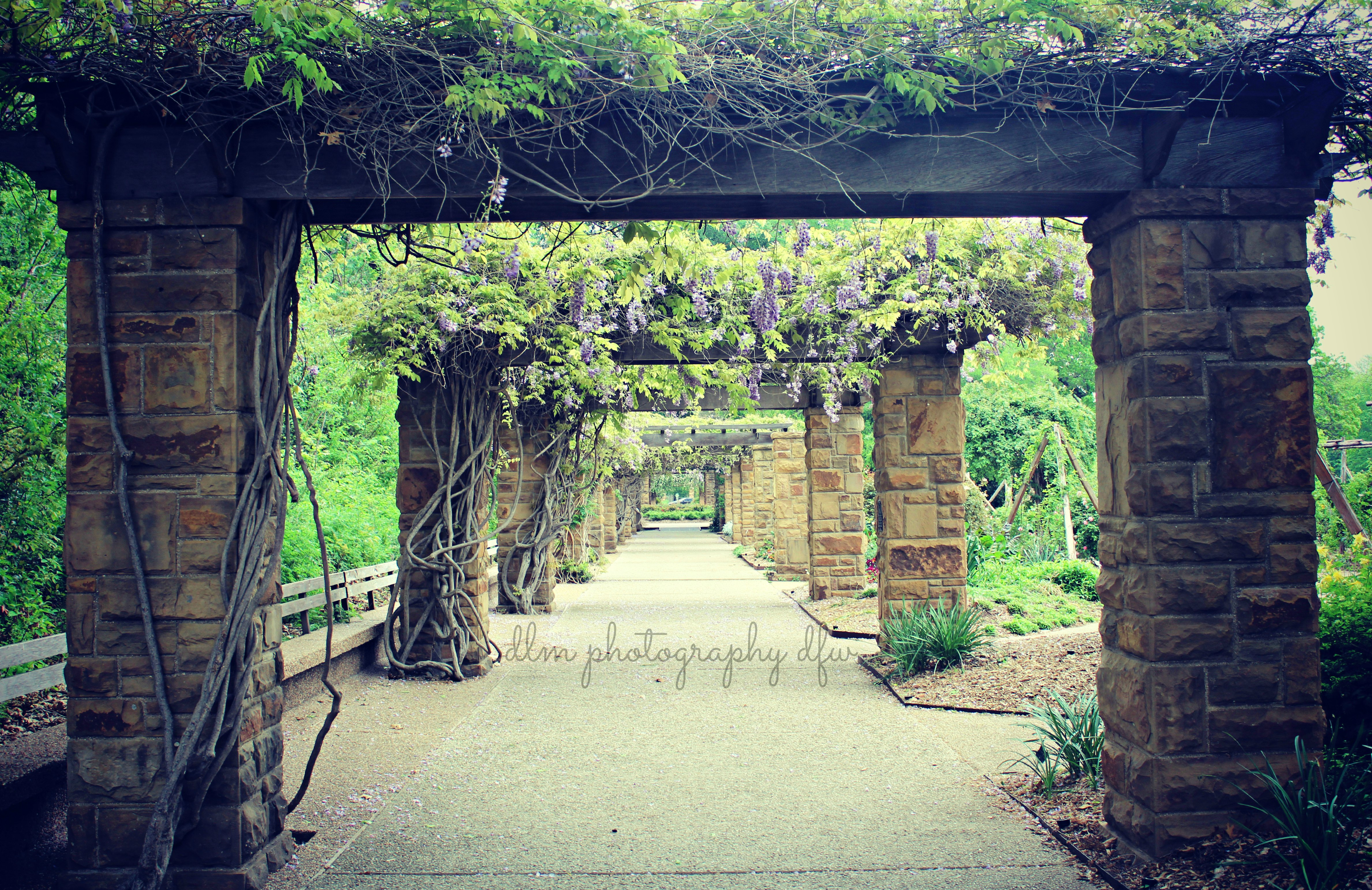 Photography Locations Part 2 Fort Worth Botanical Gardens Dlm Photography Dfw